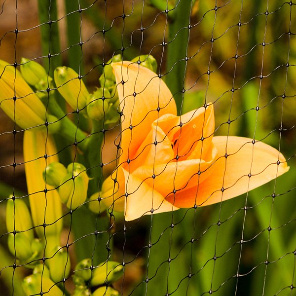 Insect & Bird Netting