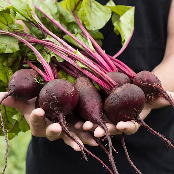 Beetroot Seeds
