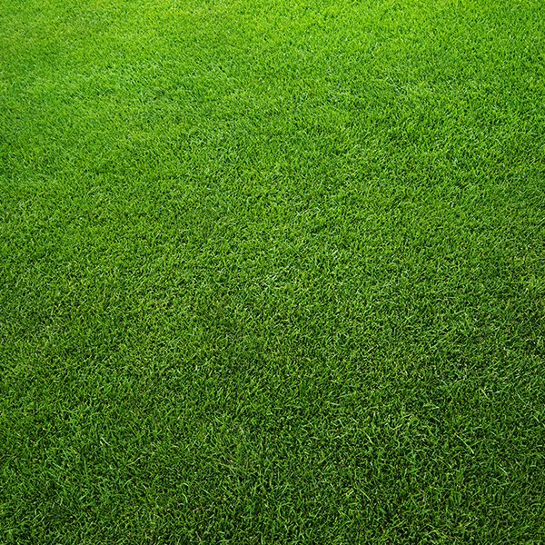 Artificial Grass & Matting