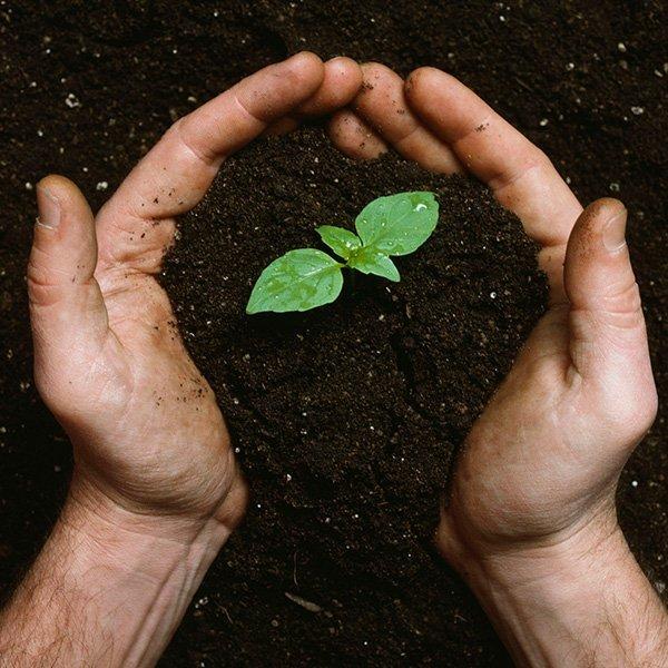 Homemade Compost & Fertiliser