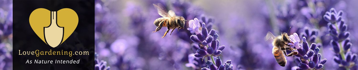 How To Conserve Bees & Bugs with Chris Myers